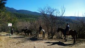 Touristen machen Reiten in der Landschaft: Berge, Wald, blauer Himmel Stockfotografie