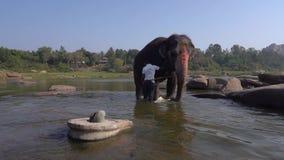 Touristen passen das Baden des heiligen Elefanten auf stock footage