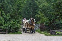 Touristen reiten einen Warenkorb, der durch ein Pferd Dudki, Weißrussland gezogen wird Stockfoto