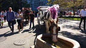 Touristen und Pferdewagen-Fahrten im Central Park, NYC, NY, USA Stockfotografie