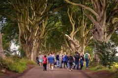 Touristen, welche die dunklen Hecken in Nordirland besuchen lizenzfreie stockbilder