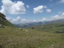 Touristen, welche die Gefahren der Karpatenberge auf der Suche nach Abenteuer herausfordern lizenzfreie stockbilder