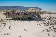 Touristes à la colonie de penquin de rochers, Simonstown Photos libres de droits