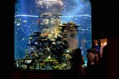 Touristes à S E a Aquarium, Singapour image stock