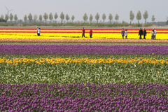 Touristes aux tulipes Photographie stock