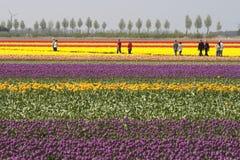 Touristes aux tulipes Photographie stock