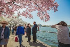 Touristes chez Cherry Blossom Season Photo libre de droits