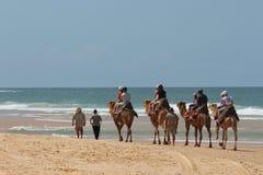 Touristes conduisant des chameaux sur la plage Photographie stock libre de droits