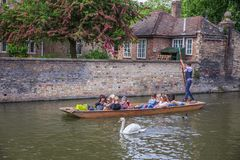 Touristes dans le bateau sur le canal observant un cygne, Cambridge, Angleterre, 21ème de mai 2017 Photographie stock