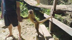 Touristes donnant la nourriture à un singe banque de vidéos
