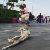 Touristes et chien, Pura Tanah Lot Temple, Bali image stock