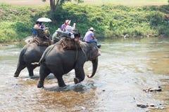 Touristes montant des éléphants à travers la rivière Photos libres de droits