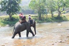 Touristes montant des éléphants à travers la rivière Image libre de droits