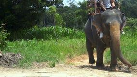 Touristes montant l'éditorial d'éléphant, Samui, Thaïlande banque de vidéos