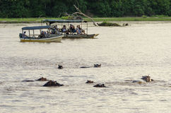 Touristes observant des hippopotames Photographie stock