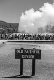 Touristes observant la vieille éruption fidèle dans Yellowstone Natio Photographie stock libre de droits