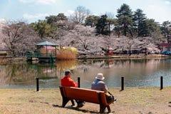 Touristes s'asseyant sur un banc par un lac et appréciant le beau paysage des fleurs de cerisier Sakura en parc d'Omiya Photo stock