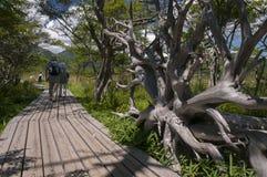 Touristes supérieurs trimardant dans la nature Image stock