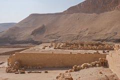 Touristes sur des chameaux dans Egyptqueen de hatshepsut, les ruines du temple photo stock