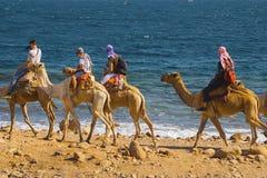 Touristes sur des chameaux en Egypte photographie stock libre de droits