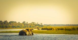 Touristes sur l'éléphant Safari Africa image stock