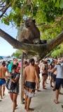 Touristes sur la plage de singe Images libres de droits