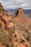 Touristes sur les chevaux dans Grand Canyon, Etats-Unis photo libre de droits