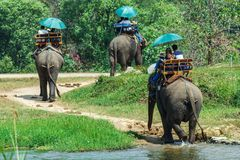 Touristes sur un éléphant de tour Images stock