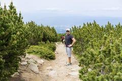 Touristes trimardant dans une haute montagne, dans une forêt de pin Image libre de droits