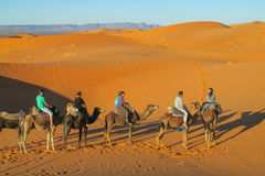 Touristic караван верблюда в пустыне Стоковое фото RF