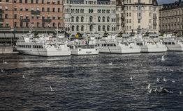 Touristic boats, Stockholm/seagulls. A view of the harbor of Stockholm with some touristic boats and sun light lit building behind; there are seagulls visible royalty free stock image
