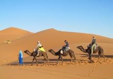 Touristic camel caravan in desert royalty free stock image