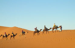 Touristic camel caravan in desert royalty free stock photo