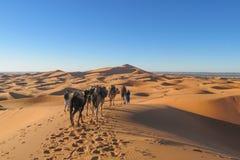Touristic camel caravan in desert stock images