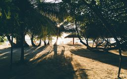 Resort beach with recliners, sunshades and palm trees royalty free stock photos