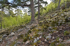Touristic footpath on the mountain slope in Corsica Royalty Free Stock Images