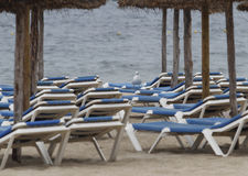 Touristic Magaluf beach during winter season. Empty beach with seagull standing over hammocks of the Magaluf beach in the spanish balearic island of mallorca Royalty Free Stock Photography