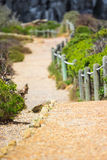 Pathway in the nature. Touristic pathway in the nature near to Cape point in South Africa Royalty Free Stock Photos