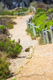 Pathway in the nature. Touristic pathway in the nature near to Cape point in South Africa Stock Photography