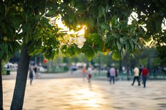 Touristic summer in Tirana,. Evening in Tirana. Blooming magnolia and blur city scape with sunset light and people silhouettes Royalty Free Stock Photography