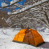 Touristic tent in a winter forest Stock Image