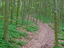 Touristic underteckna in skogen Arkivbild