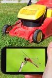 Touristische Fotografien der roten Libelle Lizenzfreies Stockfoto