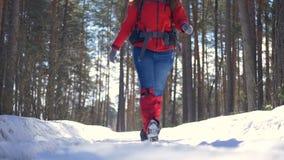 Touristische Frau, die in Waldlächelnder glücklicher aktiver Frau während der Wanderung in der Winterwaldzeitlupe wandert stock video footage