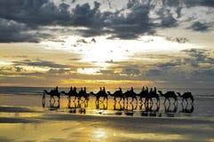 Touristische Kamele Lizenzfreie Stockfotografie