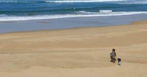 touristische Kamele 4K UltraHD Reitnahe Tanger, Marokko stock footage