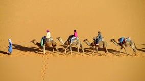 Touristische Safari auf Kamelen in der Wüste Stockfoto