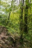 Touristische Spur im Wald belichtet durch die untergehende Sonne lizenzfreie stockbilder