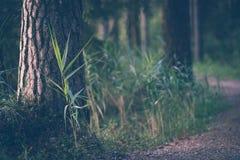 Touristische Wanderungsspur im magischen schwermütigen Holz - teils unscharfes Foto, Konzept der Reise und Tourismus lizenzfreie stockfotos