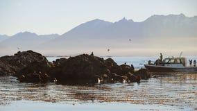 Touristische Yacht in einer Kolonie von Seelöwen. Lizenzfreies Stockbild